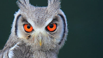 11% off Owl Encounter for Two, Oxfordshire