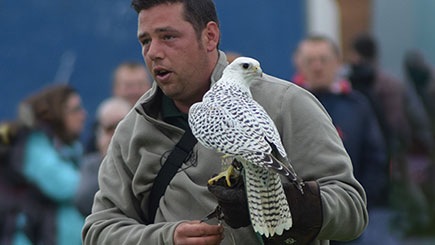 11% off Discover Falconry for Two, Oxfordshire